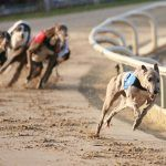Florida Regulators Allow Magic City to Ditch Dog Racing in Landmark Ruling