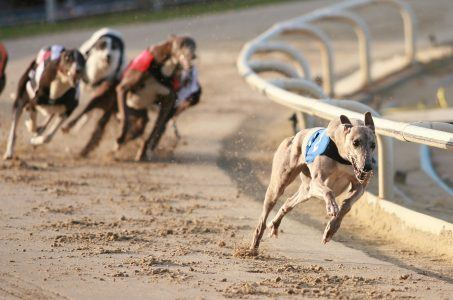 Florida Regulators Allow Magic City to Scrap Dog Racing
