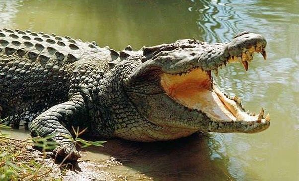 Crocodile-based gambling research wins Ig Noble award