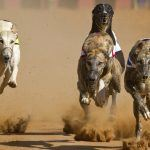 Florida Greyhound Racing Association Moves to Have Dog Racing Ban Struck from Ballot