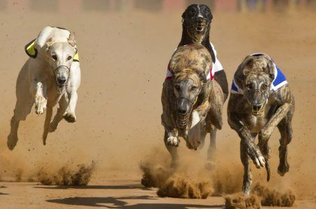 Florida greyhound racing