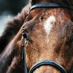 UK Horse Racing Suspended Over Fears of Vaccine-Resistant Equine Influenza Epidemic