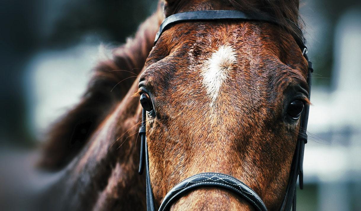 Equine influenza