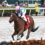 Road to Kentucky Derby: Hidden Scroll Gets His First Test in Deeply Competitive Fountain of Youth