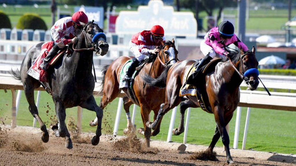 Image result for horse racing