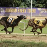 Poll Claims West Virginia Residents Favor Ending Greyhound Racing Subsidy