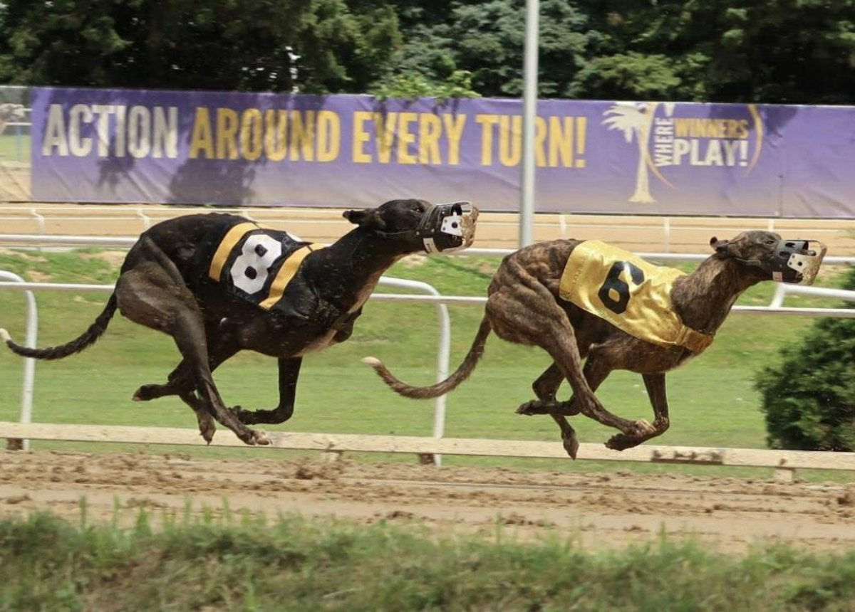 West Virginia casino greyhound breeder