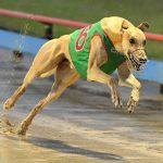 West Virginia Greyhound Racing Faces Extinction as Bill to Cut Financial Support Gains Traction