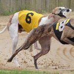 Bill to Kill West Virginia Greyhound Racing Fund Dies in Senate
