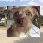 Confined Dog Dies in Stolen SUV Taken from Florida Casino