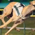 Florida Greyhound Racing Ban Does Not Violate Fifth Amendment, Judge Rules