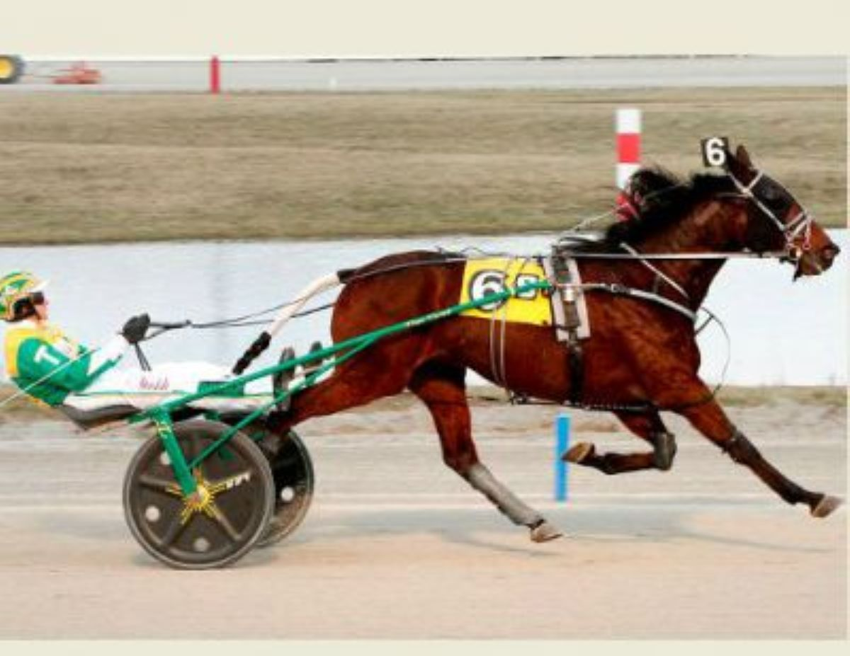 Bettor Wins Doped Horse Lawsuit