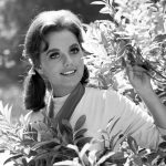 Dawn Wells, Star of 'Gilligan's Island' and Casino Owner's Daughter, Dies