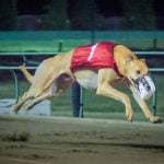 Dog Racing's Demise in Florida Signals Slow End to Longtime Gambling Sport