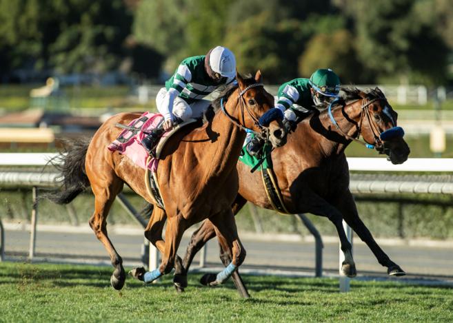Sacs à main California Horse Racing