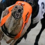 Greyhound Tests Positive for Meth, Trainer Disqualified and Fined