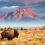 Wyoming Sports Betting Officially Legal Following Gov. Mark Gordon Signature