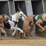 Lawmakers File Bill in Congress to Phase Out US Greyhound Racing Industry