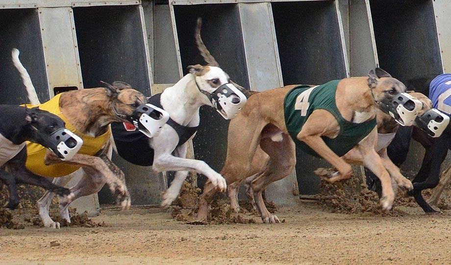 West Virginia dog racing