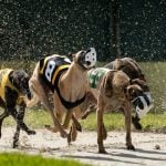 Greyhound Racing's Lawsuit Challenging Florida Ban Thrown Out of Court