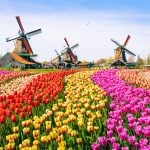 Netherlands Online Gaming Licenses Issued, Rogue Platforms Warned to Cease Operations