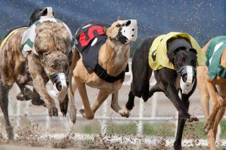 Iowa greyhound racing casino Council Bluffs