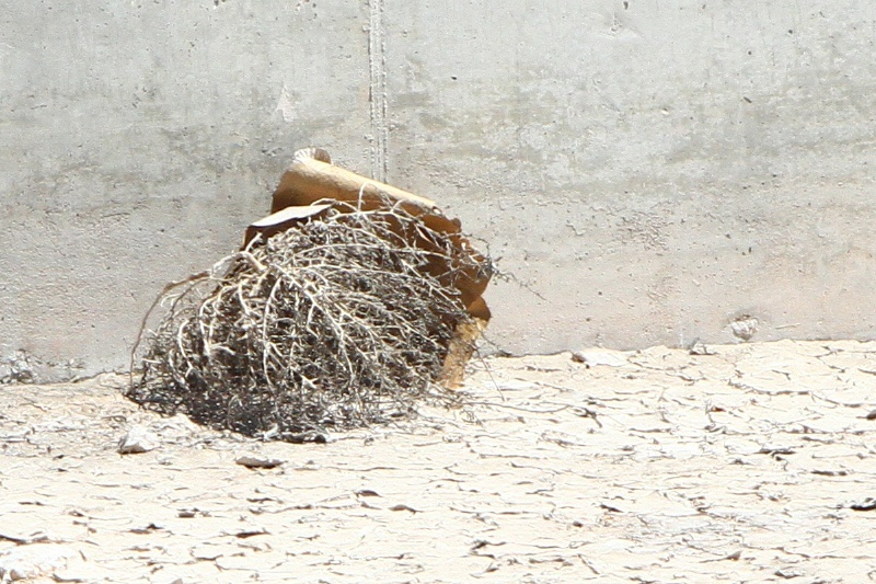 Upon closer inspection, the tumbleweed at the SkyVue site bears little resemblance to the Tiny the Tumbleweed character, but rumors persist.