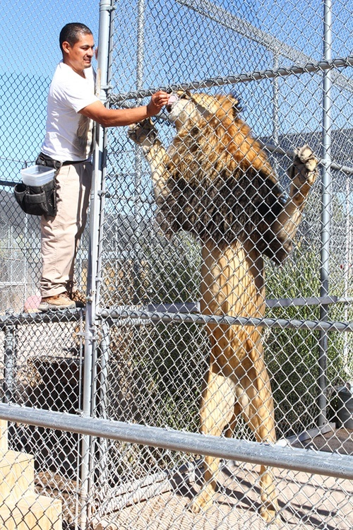 """If a lion comes after you, Luis says, """"Make yourself big."""" Thanks a lot, Luis."""