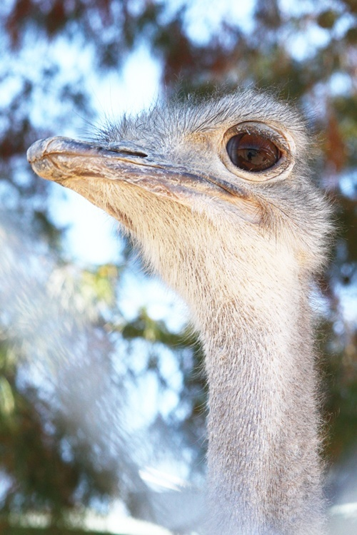 The ostriches seem a little jumpy. We have no idea why.