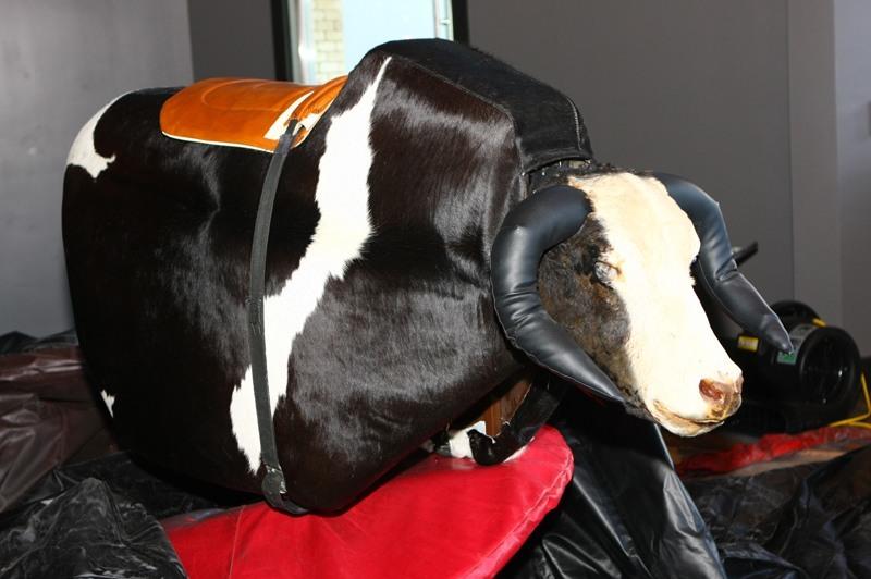 PBR bull