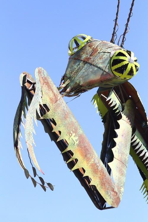 Container Park mantis