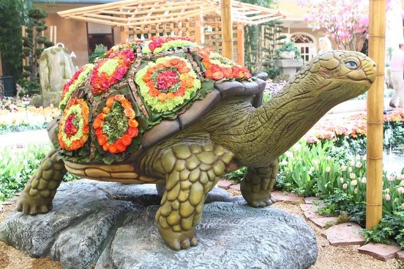 Bellagio turtle