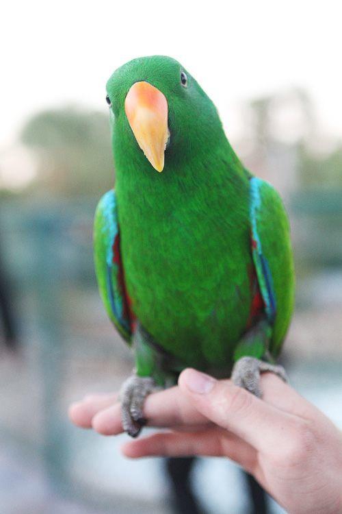 Wayne Newton bird