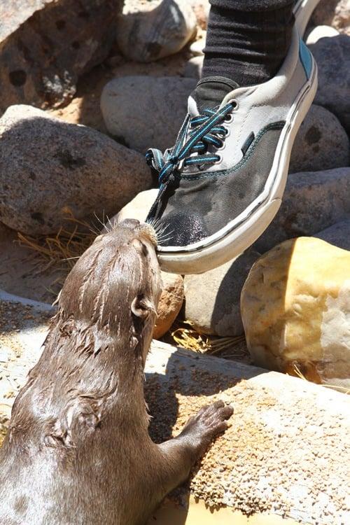 Roos-N-More zoo otters